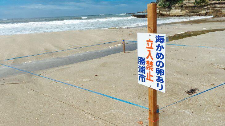 ウミガメもく〜る〜鵜原海岸